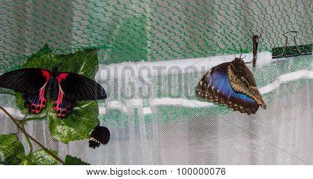 Tropical Butterflies