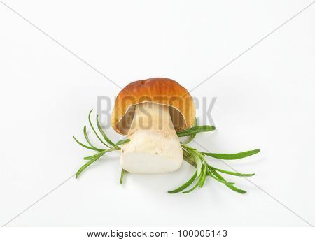 boletus mushroom with rosemary on white background