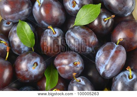 ripe plums and leaves backgrounds (overhead)