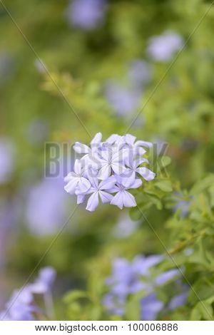 Purple Flowers That Blooming.