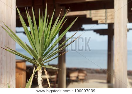 palm near hotel