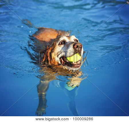 a dog swimming at a local public pool at sunset