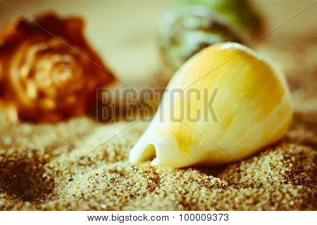 Shell Lying In The Sand
