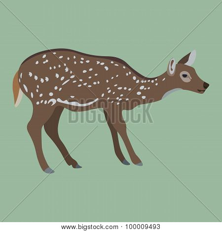 Female Deer On Green