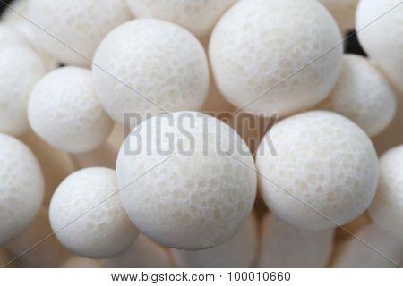 Closeup Shimeji Mushroom.