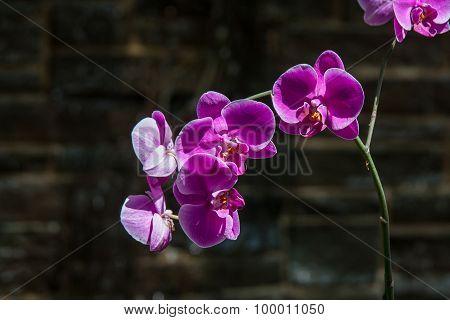 Bright Purple Orchids