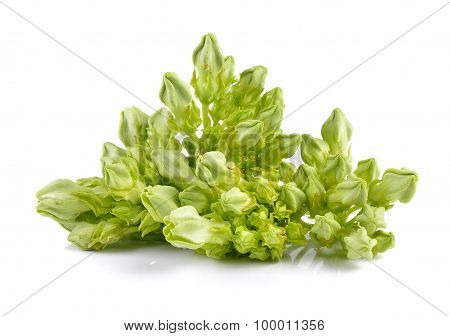 Cowslip Creeper On White Background