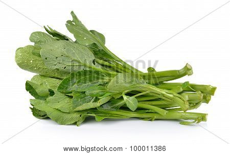 Chinese Mustard Green On White Background (nontoxic)