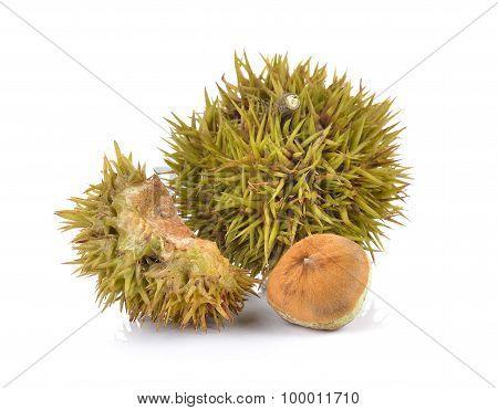 Lithocarpus Fruit On White Background