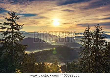 Beautiful Sunrise Over Pine Forest On The Mountain Slope In A Nature Reserve