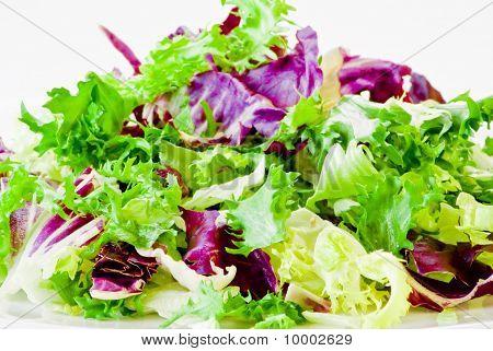 Various Salad Leaves