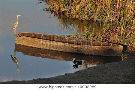 heron on boat