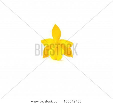 Yellow Orchid On White Background.