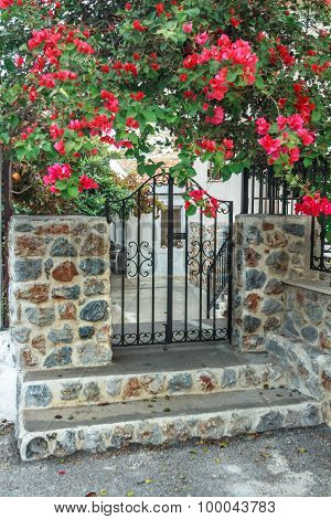 Flowering bougainvillea plant over black metal forged wicket gate