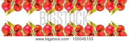 Number Of Apples With Leaves Isolated On White Background