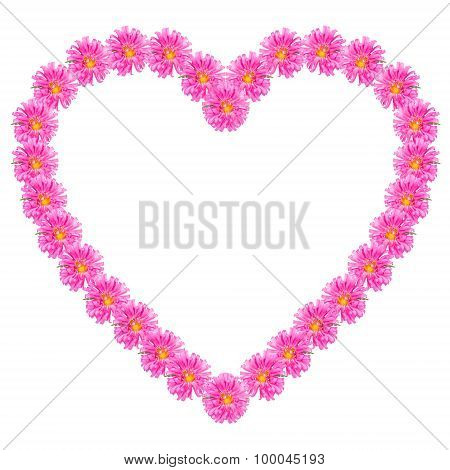 The Heart Of The Purple Aster Flowers Isolated On White Background