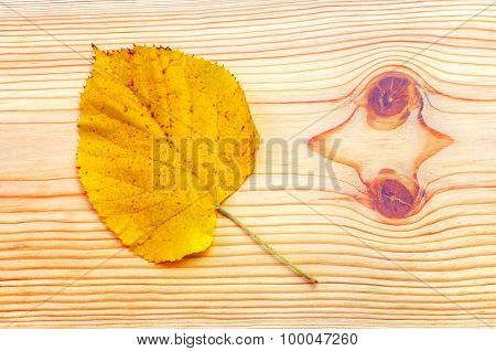 Colorful autumn leaf on wooden background