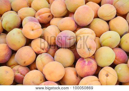 A lot of bright orange apricots