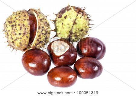 Some Fresh Chestnut Isolated On White Background