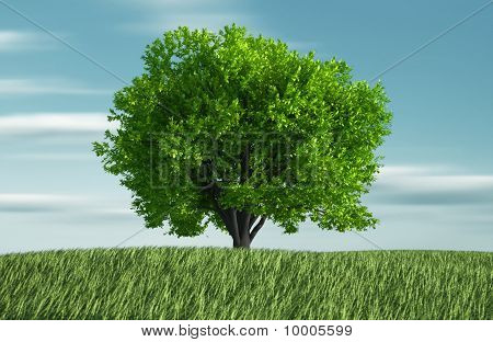 Grass And Tree