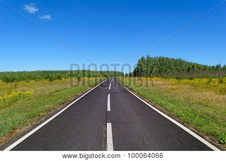 Rural Asphalt Road With Markings That Goes Into The Woods And Passing Through A Meadow