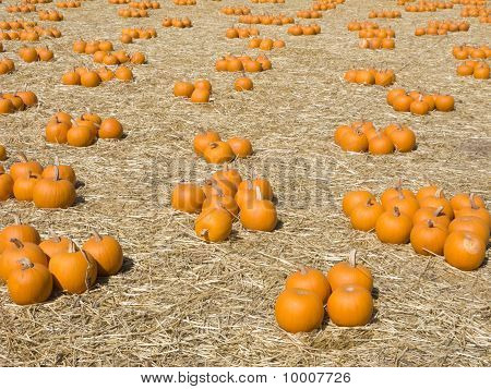 Orange Pumpkin Harvest