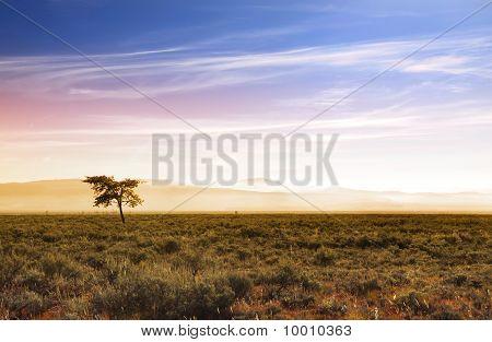 Beautiful morning scene in prairies