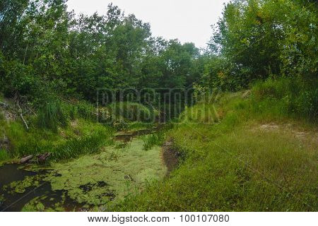 landscape wild swamp in the impenetrable forest river shallow sa