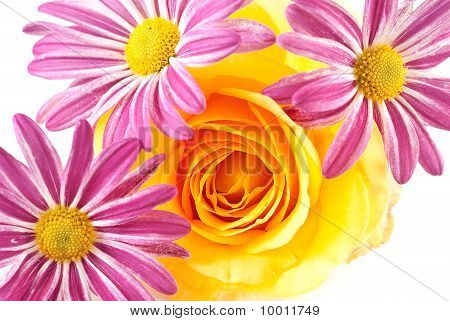Yellow Rose With Flower Background