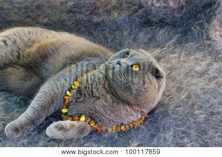 grey cat with amber eyes in the amber beads
