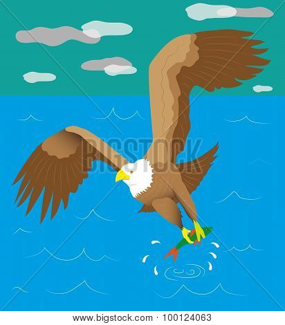 The white headed eagle has hooked fish from water