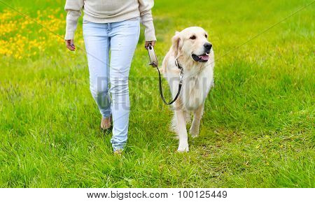 Owner And Happy Golden Retriever Dog On The Grass Walking In Summer Day