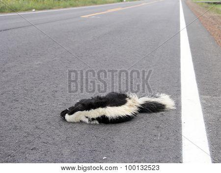 Roadkill Skunk On A Highway