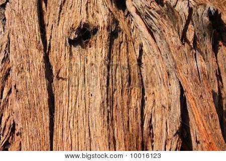 Bark Textures