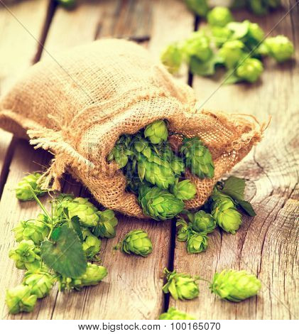 Whole hops in bag on wooden cracked old table. Brewery. Beer ingredients. Beauty fresh-picked hop cones closeup. Sack of hops on vintage background.  Retro style. Alternative medicine.