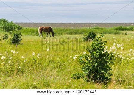 Flaxen Chestnut Horse Grazing On Windy Field By The Sea