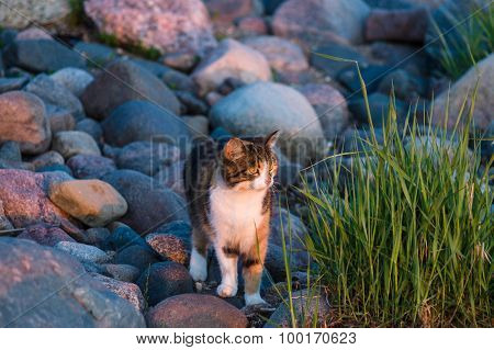 Cat At Stony Coast Looking On Sunset