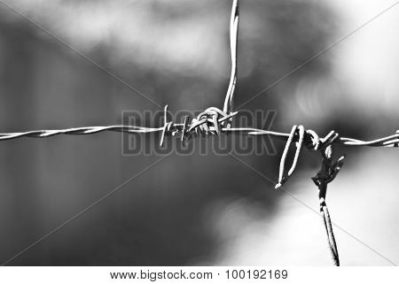 Barbed Wire -  Black And White Photography