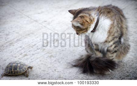 Strange encounter - dating (meeting)
