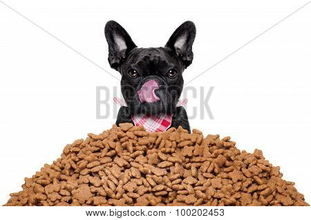 hungry french bulldog dog behind a big mound or cluster of food isolated on white background poster