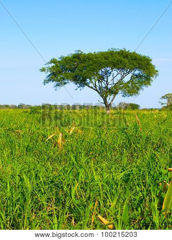 Lush vegetation of amazonian pampas