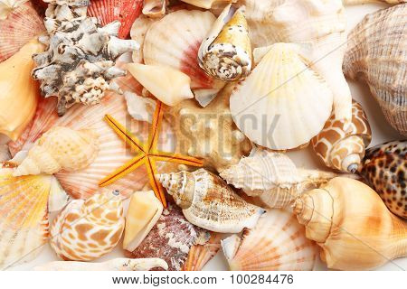 Sea Shells Background, Close Up