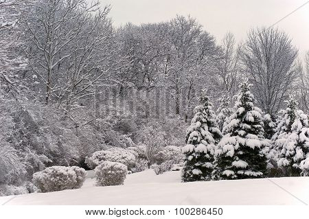 Winter Scenic Landscape