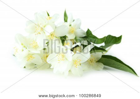 White Flowers Of Jasmine Isolated On White