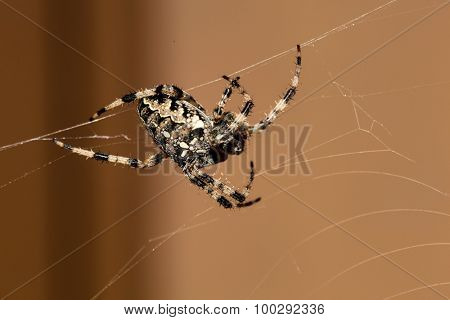 spider builds a web, symbol photo for hunting behavior, precision and patience