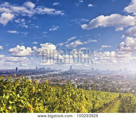 View Of The Danube River And The Skyline Of Vienna With Vineyards In Front