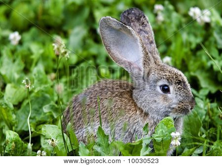 Rabbit sitting in the grass on the farm
