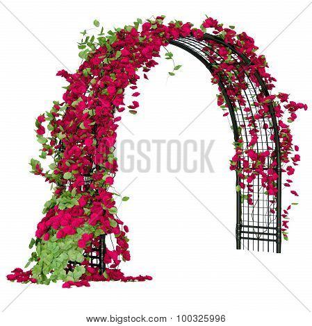 Arched pergola with roses