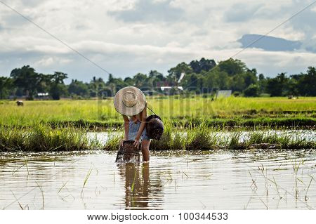 Thai Young Agriculturist Catch Fish With A Coop