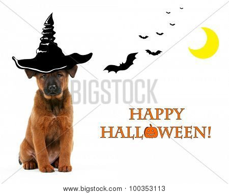 Dog with witch hat for halloween, isolated on white